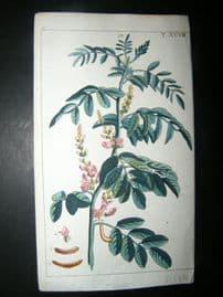 Wilhelm C1790's H/Col Botanical Print. Pepper branch, Piper obtusifolium 6-48