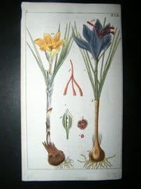 Wilhelm C1790's H/Col Botanical Print. Saffron crocus, Crocus sativa 5-52