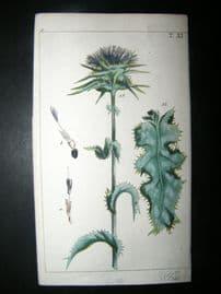 Wilhelm C1790's H/Col Botanical Print. Thistle 9-11