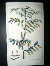 Wilhelm C1790's H/Col Botanical Print. True indigo, Indigofera tinctoria 6-47