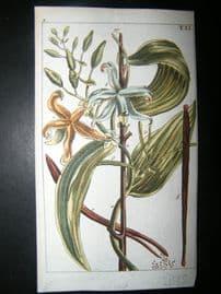 Wilhelm C1790's H/Col Botanical Print. Vanilla Orchid, Epidendron Vanilla 5-51