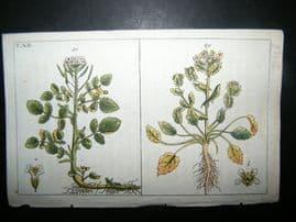 Wilhelm C1790's H/Col Botanical Print. Watercress & Scurvy Grass 4-12