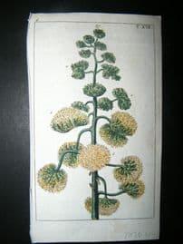 Wilhelm C1790's HC Botanical Print. Century plant, Maguey or American aloe 6-17