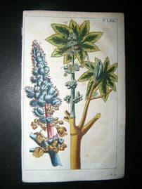 Wilhelm C1790's HC Print. Blue flowered castor oil plant, Ricinus communis 5-62