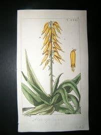 Wilhelm C1810 H/Col Botanical Print. Aloe 8-31