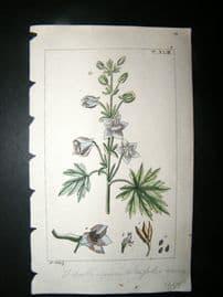Wilhelm C1810 H/Col Botanical Print. Delphinium staphisagria, Larkspur 8-43