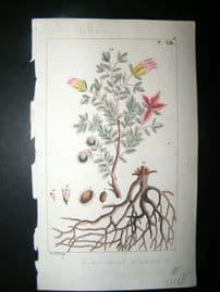 Wilhelm C1810 H/Col Botanical Print. Krameria 8-8