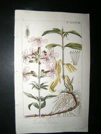 Wilhelm C1810 H/Col Botanical Print. Lychnis Dioica 8-38