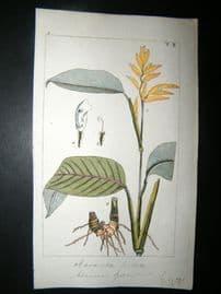 Wilhelm C1810 H/Col Botanical Print. Maranta 8-2
