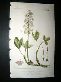 Wilhelm C1810 H/Col Botanical Print. Trifolium 8-18