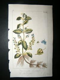 Wilhelm C1810 H/Col Botanical Print. Veronica Beccabunga 8-6