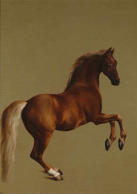 Stubbs, George: Whistlejacket. Racehorse/Equestrian Fine Art Sports Print.  (00256)