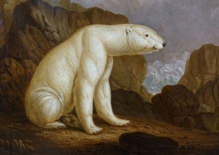 Kehrer, Christian Wilhelm: Polar Bear. Fine Art Print/Poster
