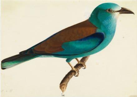 Wright, Wilhelm von: The European Roller. Fine Art Print/Poster. Sizes: A4/A3/A2/A1 (0060)