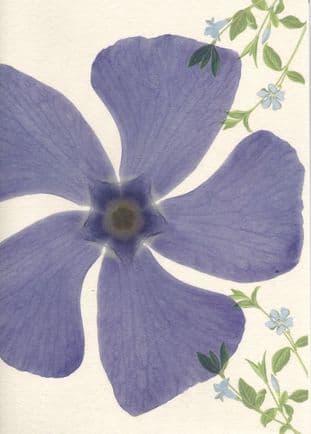 Gift Card - Periwinkle (Vinca Minor)