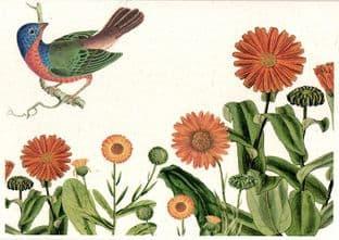 Marigolds: Calendula Officinalis - Greetings Card