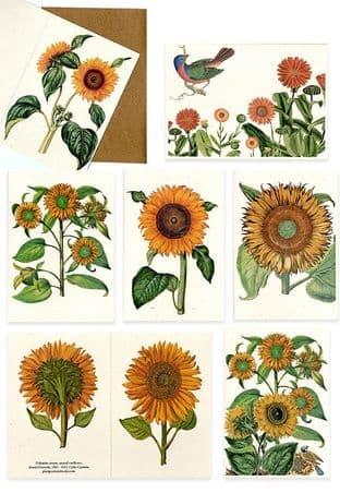 Set of Six Helianthus & Calendula Greetings Cards