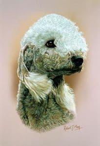 Bedlington Terrier Head Study Print RMDH152