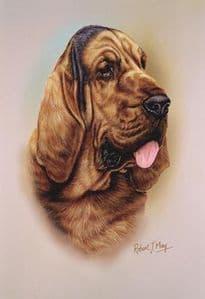 Bloodhound Head Study Print RMDH20