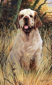 Clumber Spaniel Limited Edition Print RMLE22
