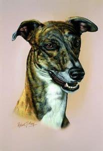 Greyhound Head Study Print RMDH84