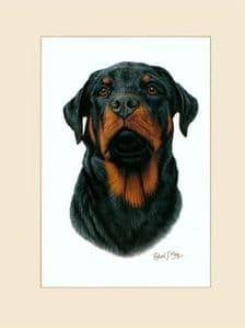 Original Rottweiler Painting