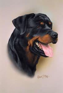 Rottweiler Head Study Print RMDH122