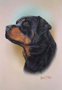 Rottweiler Head Study Print RMDH124