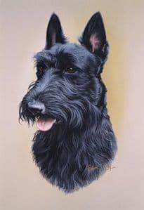 Scottish Terrier Head Study Print RMDH132