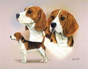 Signed Multistudy Beagle Print MS1009
