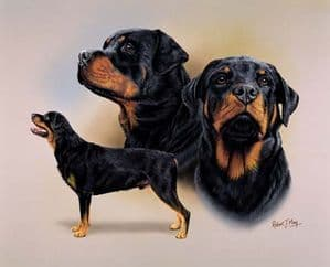 Signed Multistudy Rottweiler Print MS1001