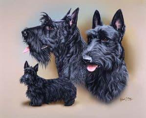 Signed Multistudy Scottish Terrier Print MS1035