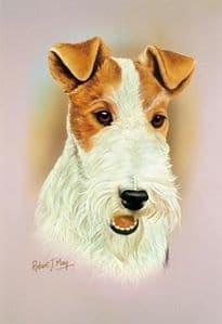 Wire Fox Terrier Head Study Print RMDH150