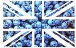 UK British Union Jack Flag Design With Pile Of Blue Skulls Vinyl Car Sticker Decal 110x70mm